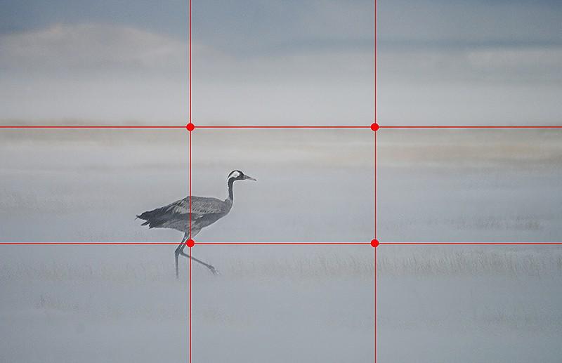Améliorez vos photos grâce aux 15 règles de composition de base