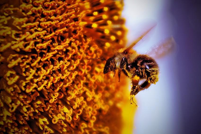 Photographier les insectes : Capturez le moment idéal