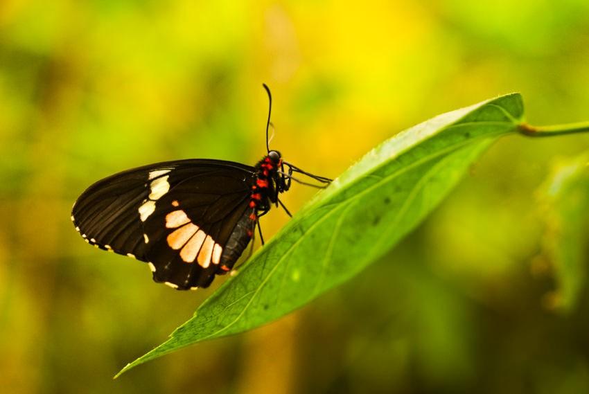 Photographier les insectes : Rapprochez-vous (mais de loin)
