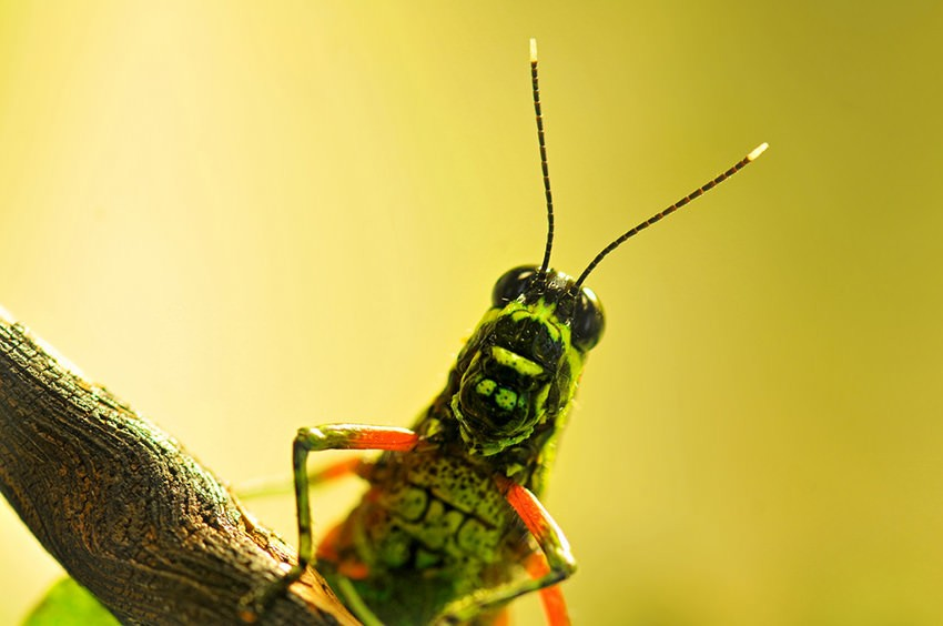 Photographier les insectes : Contrôlez la lumière