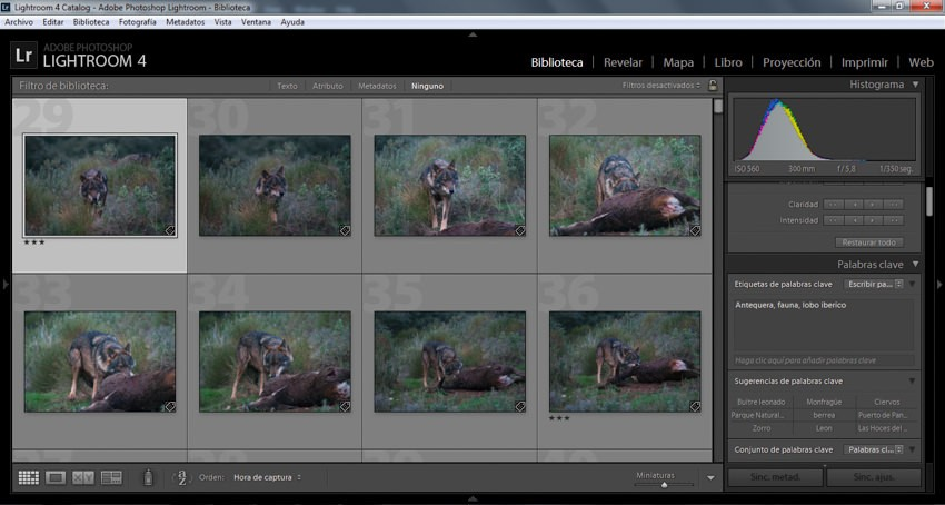 Comment traiter vos photos au format RAW ? Tout ce que vous devez savoir
