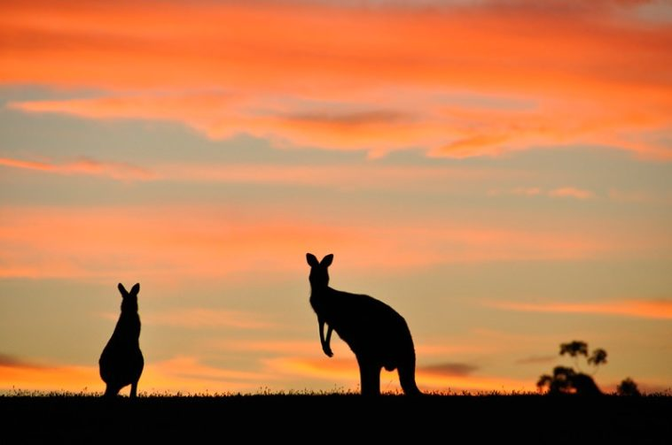 Comment maîtriser la photographie de silhouettes : 5 clés essentielles