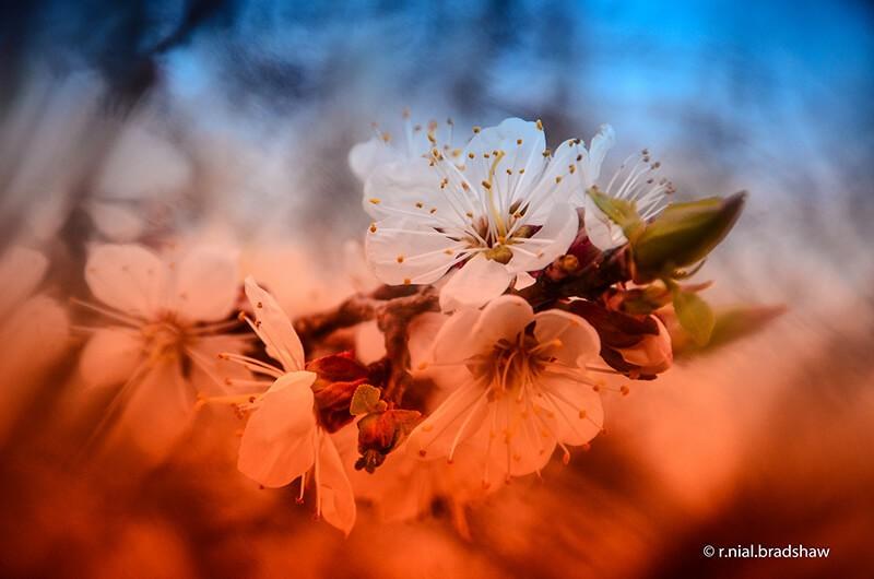 filtres photo : filtres corrections de couleur
