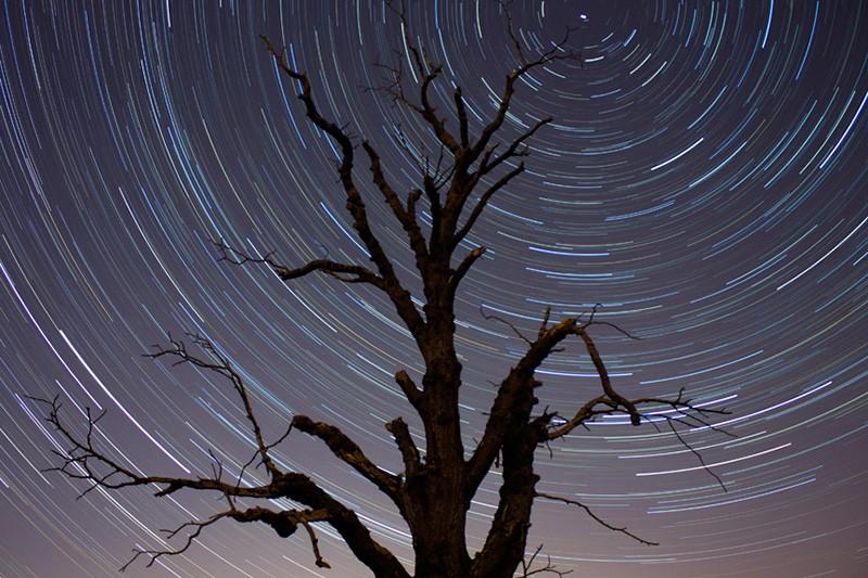 30 incroyables photos d'étoiles pour vous inspirer : Tree and star trails, de Brian Tomlinson