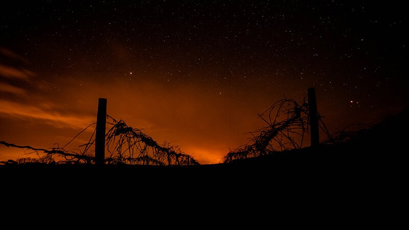 Grapevine fires, de Ryan Hallock