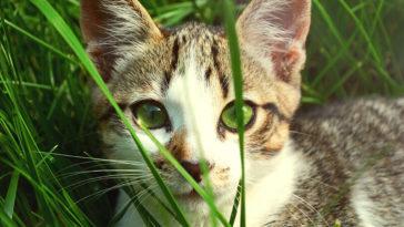 15 conseils pratiques pour réussir vos photos d'animaux de compagnie
