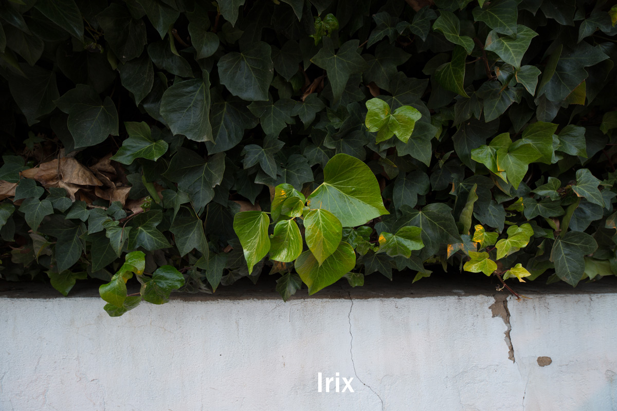 Test comparatif Irix 15 mm Samyang 14 mm