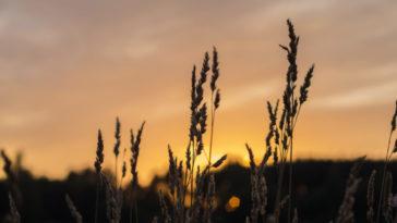 Comment prendre des photos avec un arrière-plan flou : 7 clés pour y parvenir