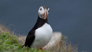 20 conseils utiles pour l'observation et la photographie d'oiseaux