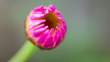 6 astuces pour prendre des photos de fleurs comme un professionnel