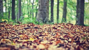 10 conseils pour des photos d'automne réussies (II)