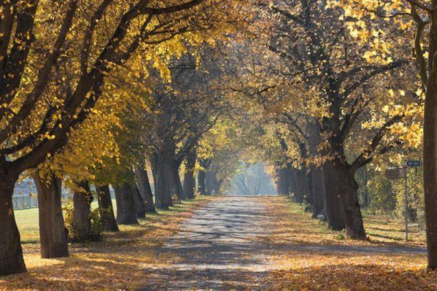 10 astuces pour des photos d'automne réussies (I)
