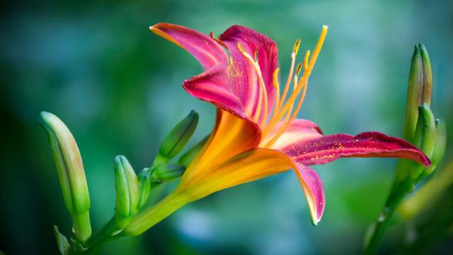 20 photos de fleurs pour vous inspirer au printemps