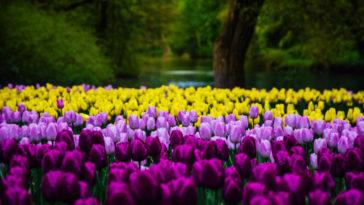 Photographier le printemps à l'aide de 9+1 astuces essentielles