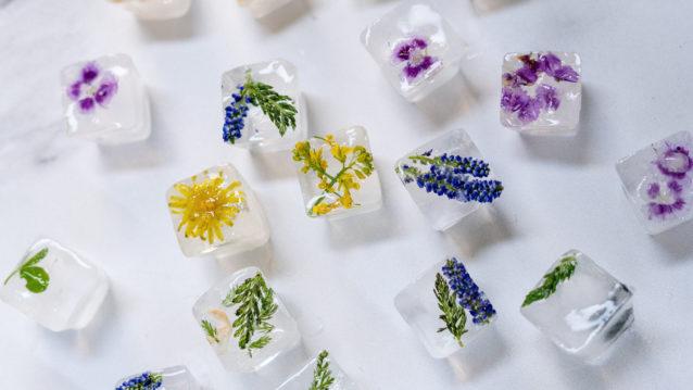 Comment photographier des fleurs congelées chez vous ?